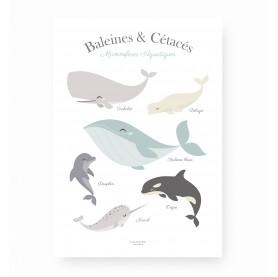 affiche enfant baleines, affiche baleines, affiche baleines et cétacés, lutin petit pois