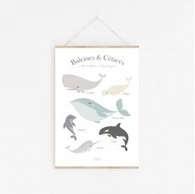 affiche enfant animaux marins, affiche enfant poissons, affiche enfant mer et océan