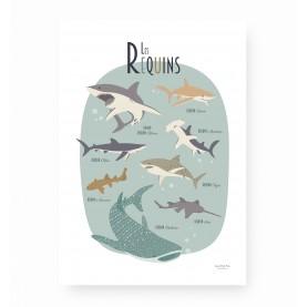 affiche requins, affiche enfant requins, affiche animaux marins, requins