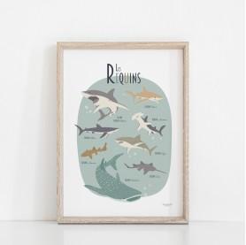 affiche enfant animaux marins, affiche enfant requins, affiche enfant animaux de la mer
